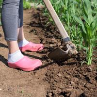 Vegetable Gardening Primer with Ann Loughran